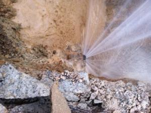 Charlotte emergency plumbers water leak